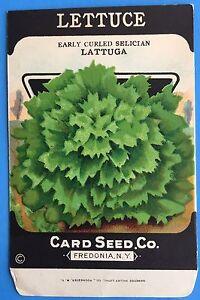 *Original* KALE Dwarf Curled Scotch CARD SEED Packet Pack 1920/'s Fredonia N.Y.
