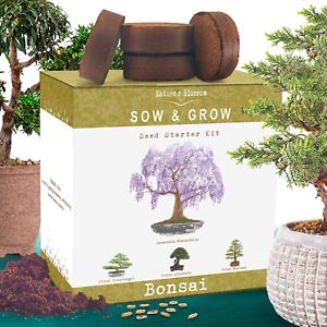 Nature's Blossom Bonsai Tree Kit - Grow 4 Types of Bonsai Trees From Seed. Indoo