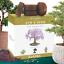 thumbnail 1 - Nature's Blossom Bonsai Tree Kit - Grow 4 Types of Bonsai Trees From Seed. Indoo