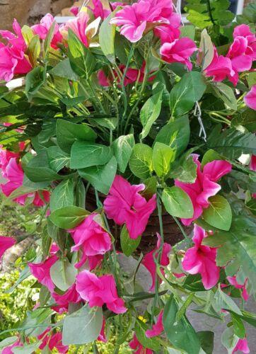 Artificiale DA Cesto sospeso Fiori Rosa Morning Glory EDERA foglia di felce pianta a foglie