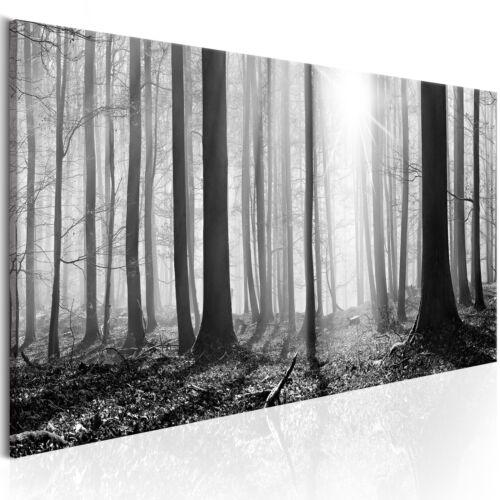 NATUR WALD LANDSCHAFT GRAU Wandbilder xxl Bilder Vlies Leinwand c-B-0235-b-a