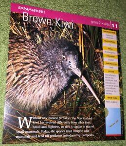 Endangered-Species-Animal-Card-Birds-Brown-Kiwi