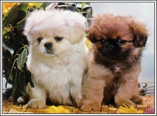 4Pack Dog Puppy Pekingese Dogs Puppies Stationery Greeting Notecards// Envelopes
