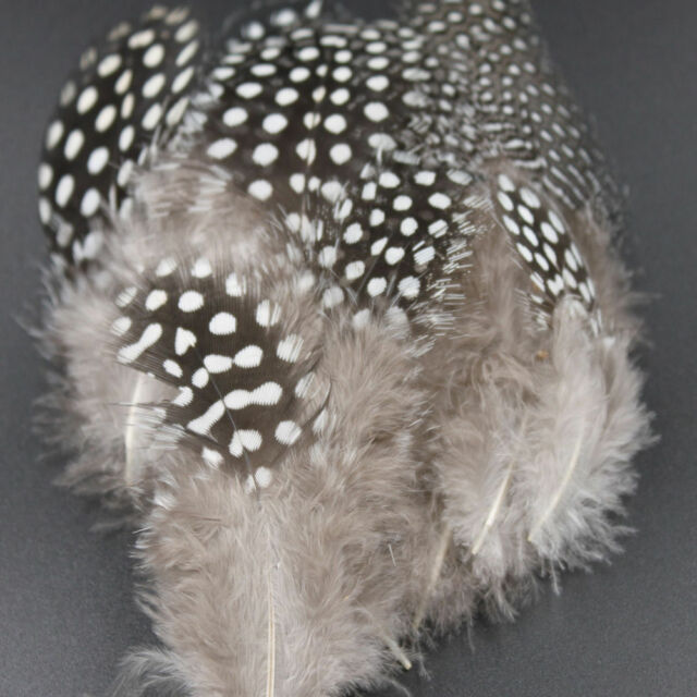 50pcs Fishing Party Decoration Dyed Guinea Fowl Feather