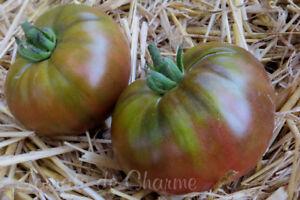 10 graines de tomate très ancienne NOIRE DE CRIMEE excellente heirloom tomato