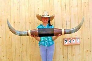 Manejar-Largo-Cuernos-Montado-140cm-Vaca-Fuerte-Calavera-Taxidermia-LH2411