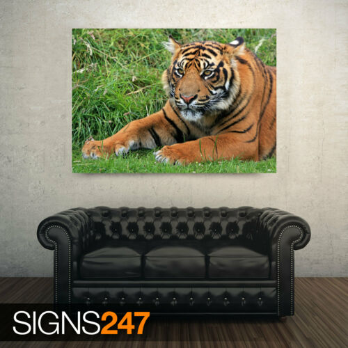 Photo Poster Print Art * All Sizes WILD SUMATRAN TIGER Animal Poster 3350