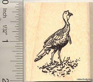 Wild Turkey rubber stamp G11111 WM Thanksgiving