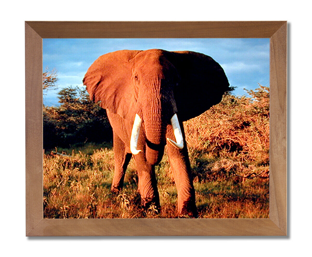 African Elephant Kids Room Animal Wildlife Wall Picture Honey Framed Art Print