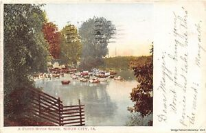 SIOUX-CITY-IA-1901-06-Cows-in-the-Floyd-River-VINTAGE-IOWA-GEM
