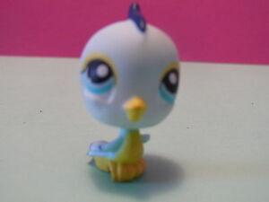 petshop-oiseau-pinson-bleu-blue-chaffinch-bird-N-190