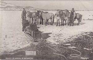 Very rare, Early 1900's vintage postcard, Polar Expedition