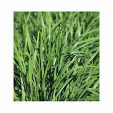 CHIVES SEED, HEIRLOOM, ORGANIC, NON GMO, 25+ SEEDS, CHIVE SEED, CHIVE SEEDS