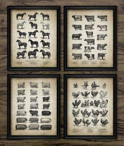 Vintage Farm Animals Poster Chicken Pig Print Home Decor Canvas Art Painting