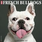 Just French Bulldogs by Willow Creek Press 9781682340967 Calendar 2016