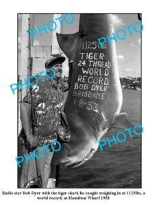 OLD-8x6-PHOTO-WORLD-RECORD-TIGER-SHARK-CAPTURE-c1953-BOB-DYER-HAMILTON-WHARF