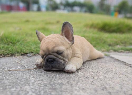 Lying Down Sleeping French Bulldog Puppy Life Like Figurine Statue Home Garden