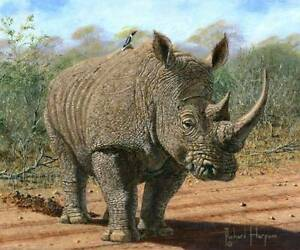 ORIGINAL-RICHARD-HARPUM-Kruger-White-Rhino-National-Park-South-Africa-PAINTING