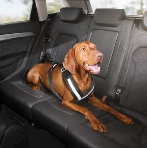 Ceinture de sécurité pour chien Audi d'origine Ceinture de sécurité pour chien, taille L / Grand