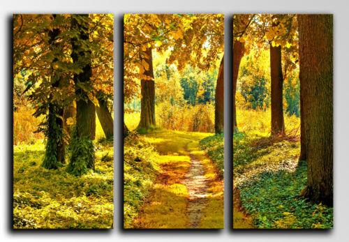 Cuadro fotografico base madera 87 x 62 cm Bosque Otoño Atardecer Sol