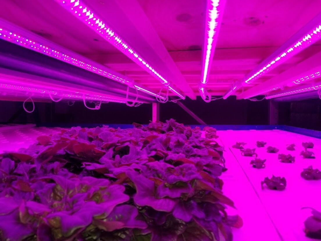 4 Hydroponic LED grow lights 4 foot T8 tubes Great for lettuce and microgreens