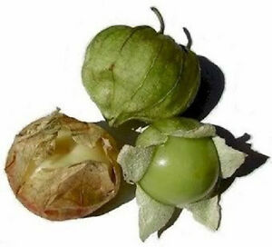 200-GRANDE-RIO-VERDE-TOMATILLO-Vegetable-Seeds-Gift