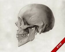HUMAN SKULL SIDE PROFILE ANATOMY ILLUSTRATION PAINTING ART REAL CANVAS PRINT