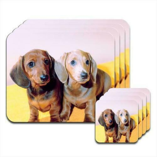Dachshund Puppies Coaster /& Placemat Set