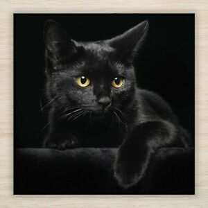 Get Well Blank Card Beautiful Black Cat Same Day Despatch Fast Freepost Ebay