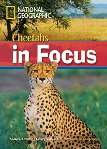 Cheetahs in Focus by National Geographic (author), Rob Waring (author)