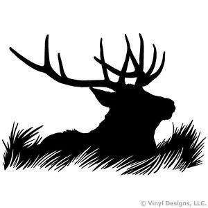 mule deer buck drawing