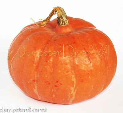 MOOREGOLD BUTTERCUP  Squash Organic  20+ seeds Rich Extra Sweet Heirloom NON-GMO