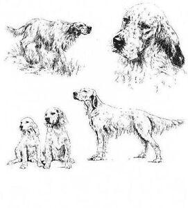 English-Setter-1963-Vintage-Dog-Print-Matted