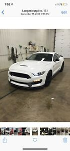 2016 Mustang GT350 Shelby  like new!!!!! $60000.00