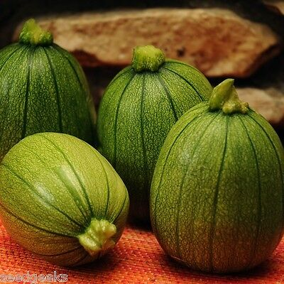 Tatume Summer Squash Heirloom Seeds - Non-GMO - Untreated - Open Pollinated!