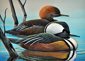 Image result for hooded mergansers free art