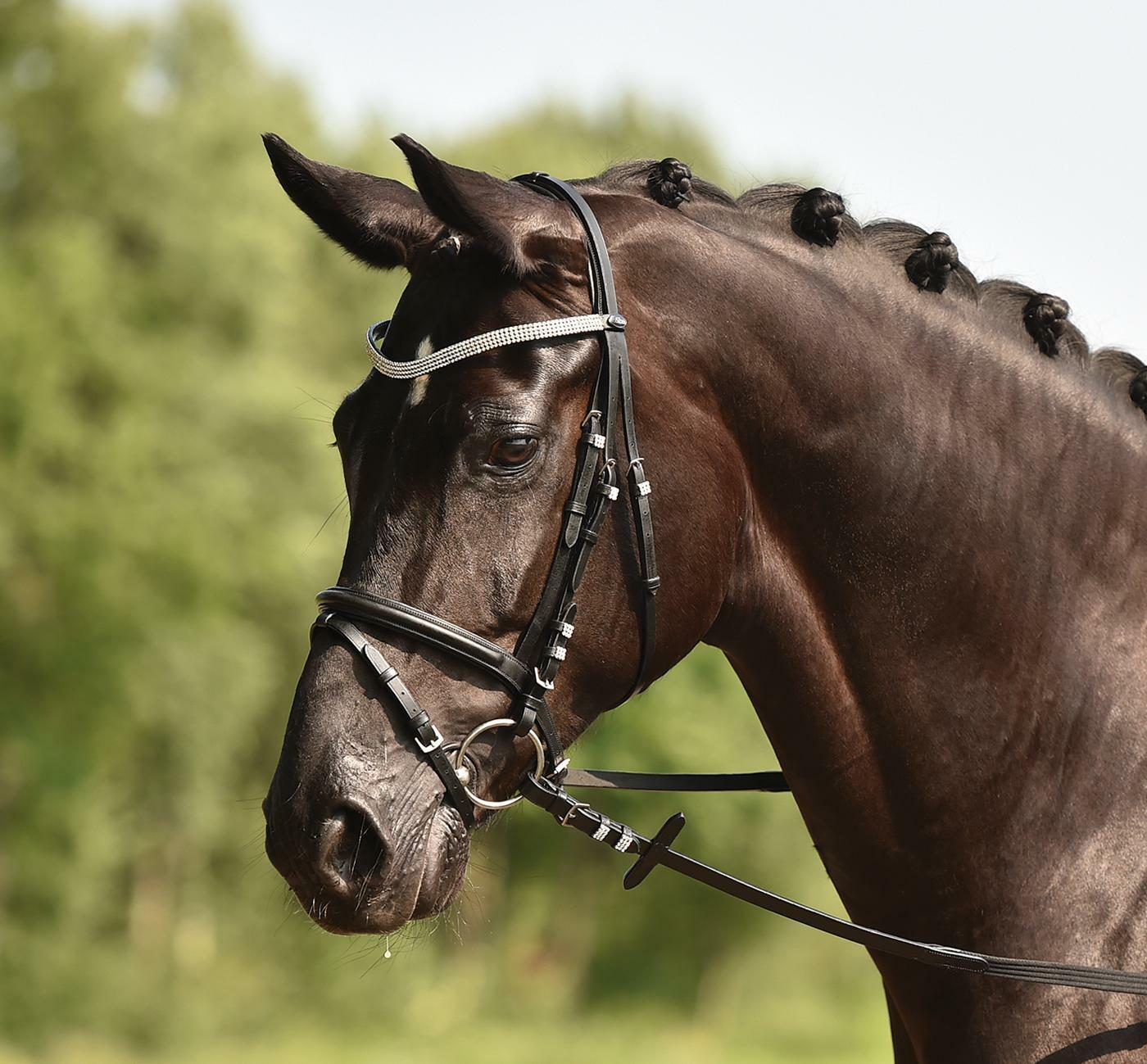Busse Solibel  Dressage Bridle Bridle Bridle Crystal - New  Full   WB Dimensione 7ae86d