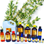 3ml-Essential-Oils-Many-Different-Oils-To-Choose-From-Buy-3-Get-1-Free thumbnail 97