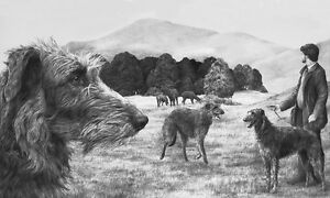 Mike-Sibley-SCOTTISH-DEERHOUND-Deerhounds-Deer-Hounds-Canine-Prints-Art