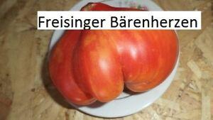 Freisinger-Baerenherzen-Tomate-10-Tomaten-Samen-Ernte-2019-aus-bio-Anbau-Nr-229