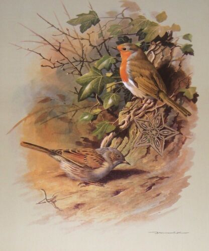 "Vintage Bird Art Print Basil Ede Full Color Litho 9/"" x 11.5/"" ** SEE VARIETY"