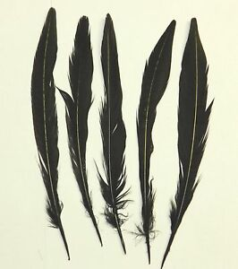 10 DYED BLACK RINGNECK PHEASANT TAIL FEATHERS 7 TO 9 INCHES FOR FLY TYING