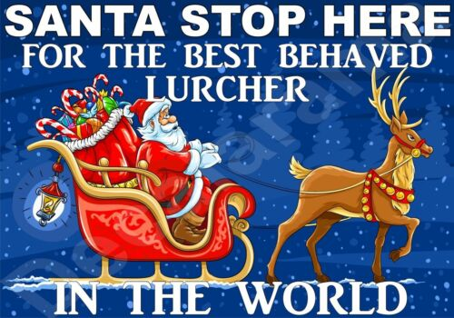 STOP HERE FOR BEST BEHAVED LURCHER Santa Sign Novelty Laminated Gift Present