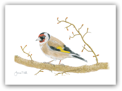Bird Card United 'goldfinch' Wildlife Print From Original Drawing By Joanne T Kell Factories And Mines