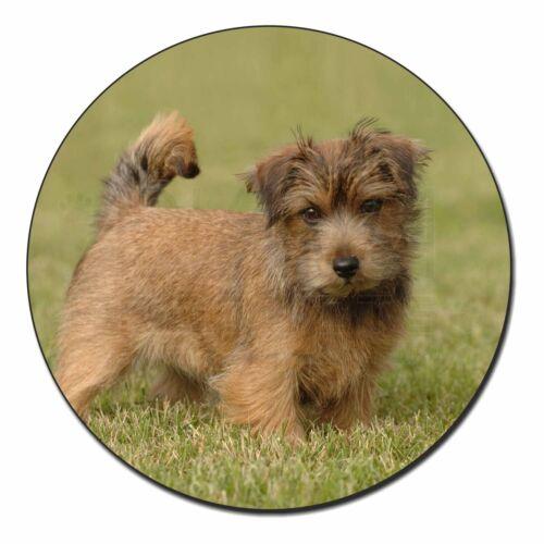 AD-NT1FM Norfolk Terrier Dog Fridge Magnet Stocking Filler Christmas Gift