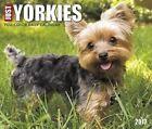 Just Yorkies by Willow Creek Press 9781682342671 (calendar 2016)