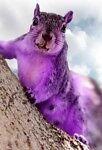 Purple Squirrel Emporium