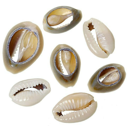 BD631 15 Shell Beads Great Beach Jewelry Item Natural Shells