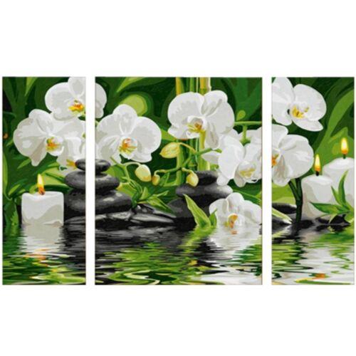 Wellness Oase 50X80~Orchidee Blume Pflanze Blüten 609260681 Malen nach Zahlen