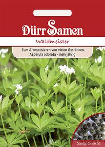 0193-Waldmeister-Maikraut-Asperula-odorata-mehrjaehrig-ca50-Korn-Seeds-Duerr-Samen